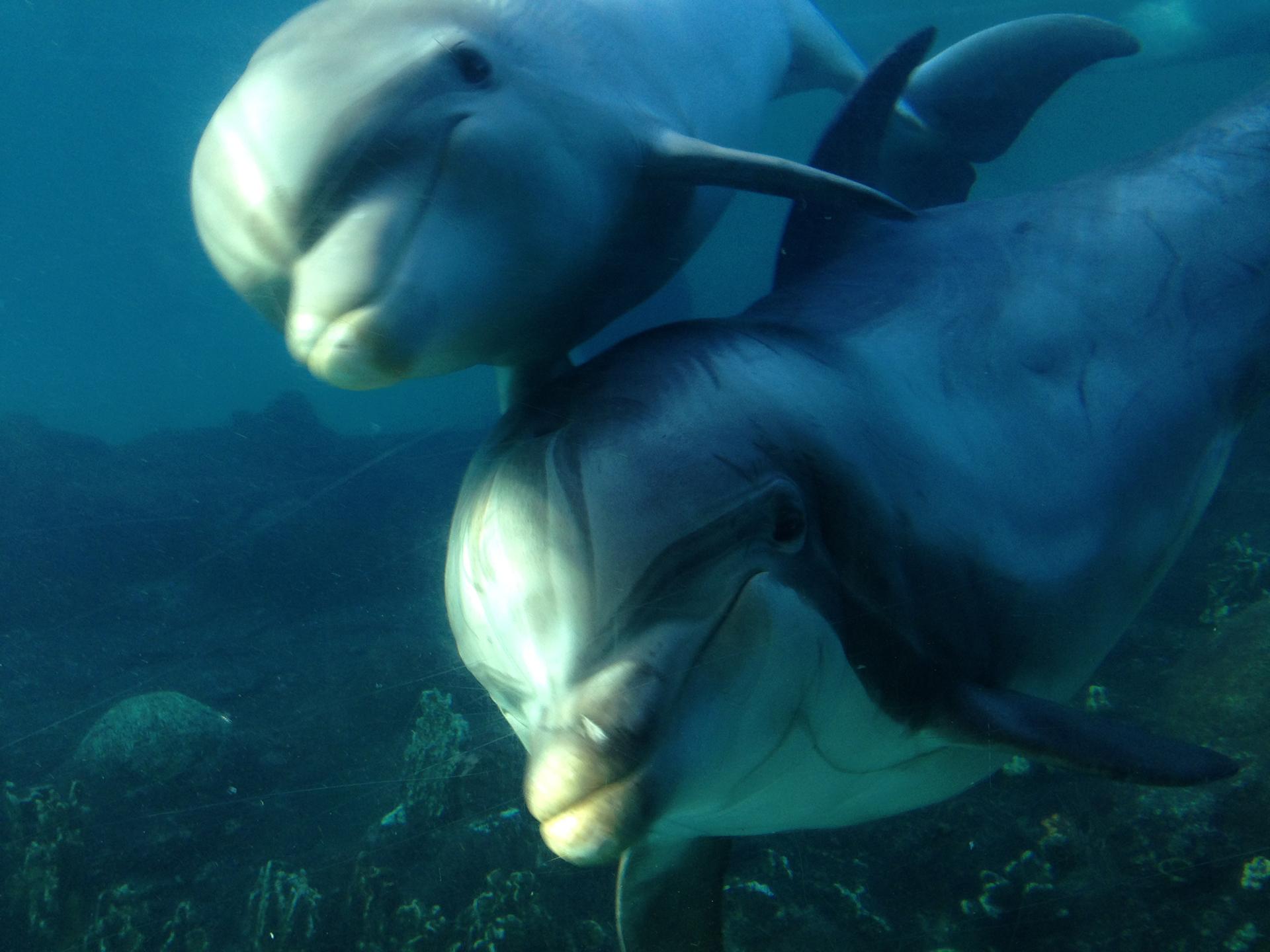 avistamiento de ballenas y delfines bajo el mar white tenerife
